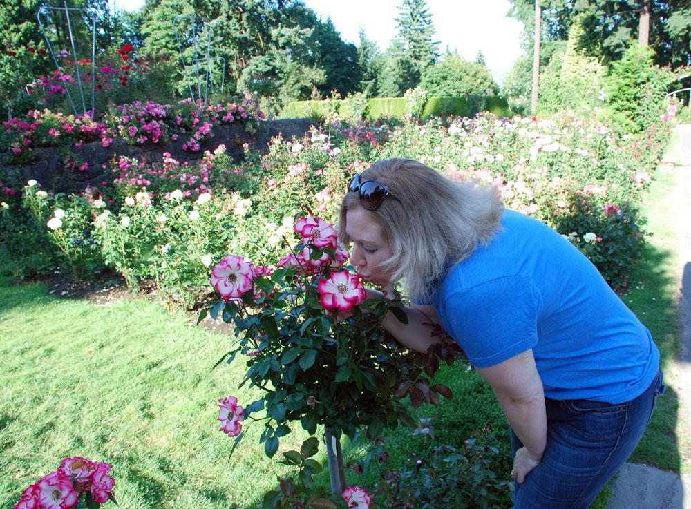 AA-Hykel-The-International-Rose-Test-Garden