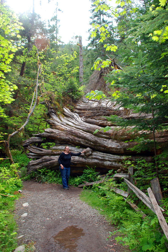 AA Mysti-Olympic-National-Forest