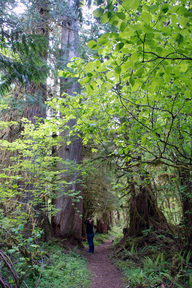 AA Mysti-Shady-Lane-Trail-Olympic-National-Forest