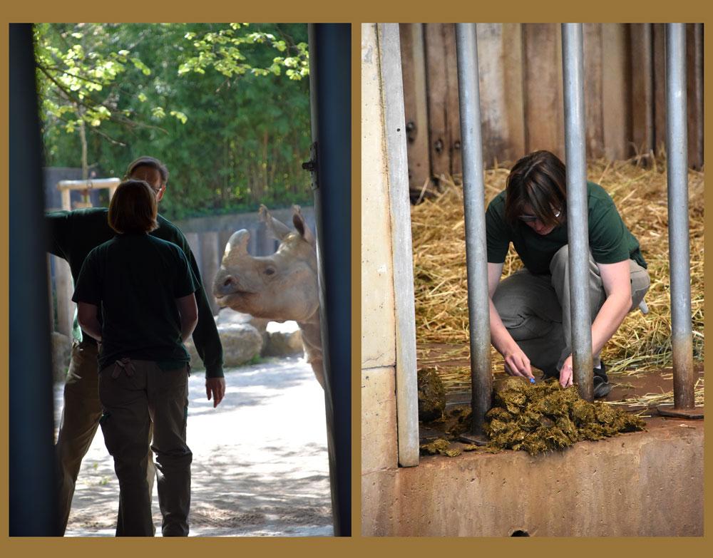 2015-04-23-53A-Wilhelma-zookeeper