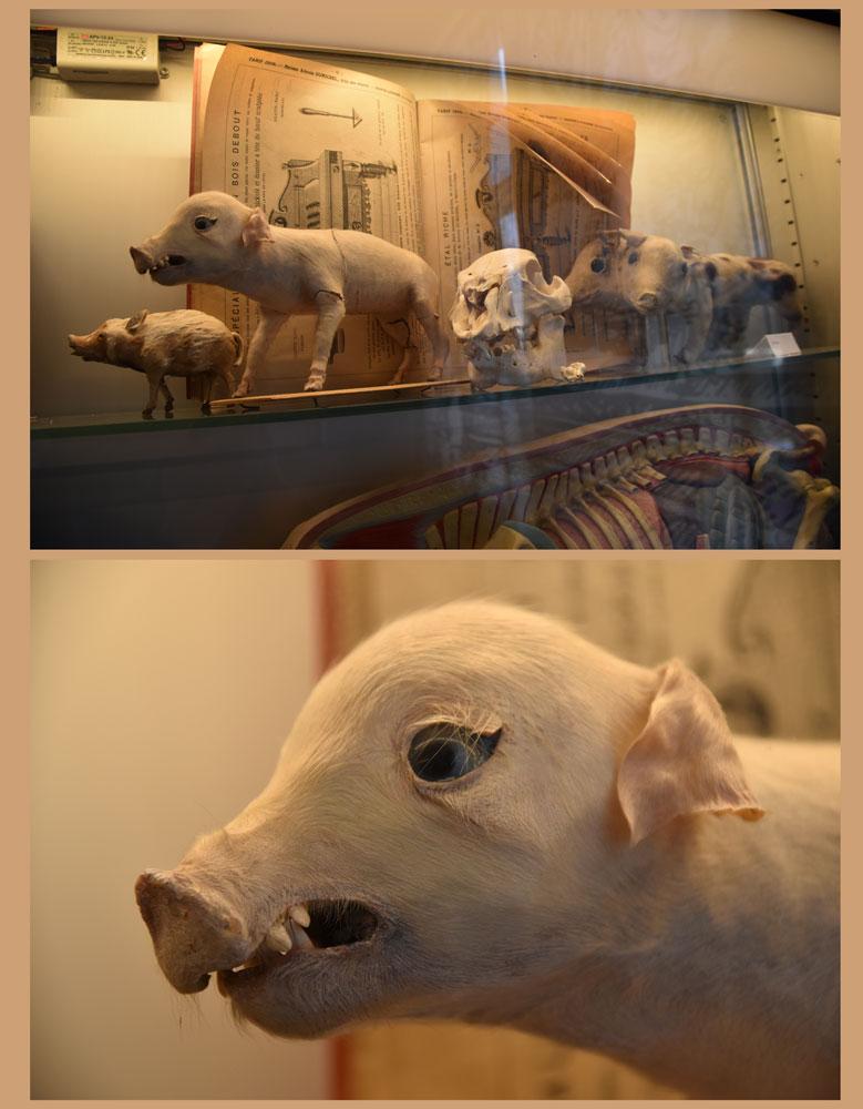 2015-04-21-27A-Schweine-Museum